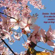 5 aprilie – Duminica Floriilor la catolici